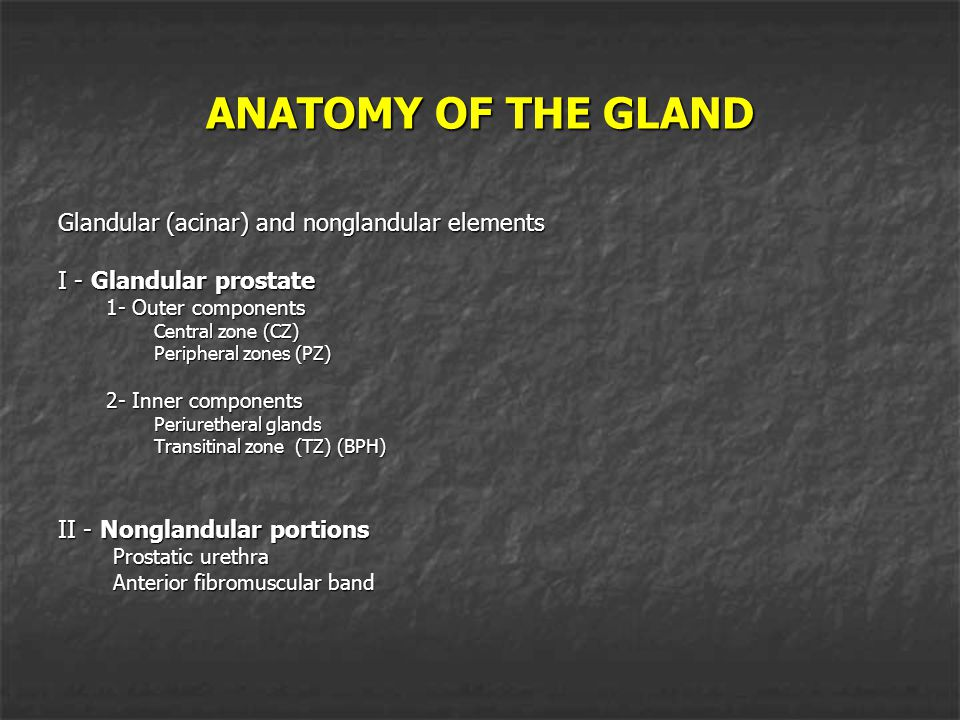ANATOMY OF THE GLAND Glandular (acinar) and nonglandular elements