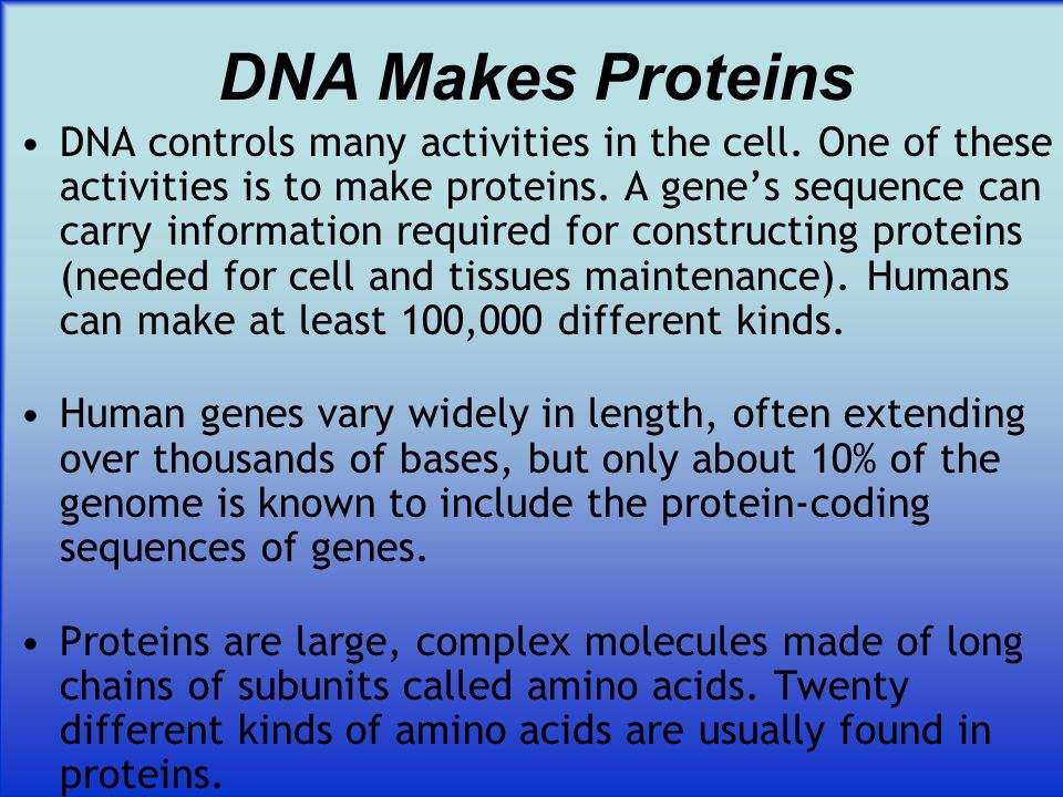 DNA Makes Proteins