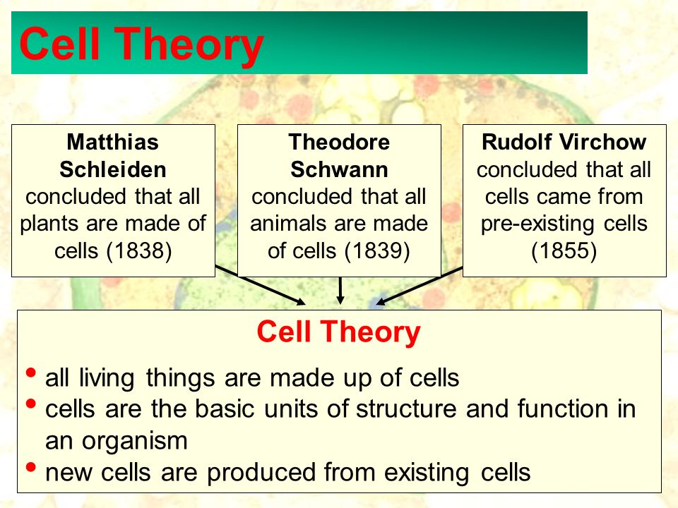 Cell Theory Cell Theory all living things are made up of cells