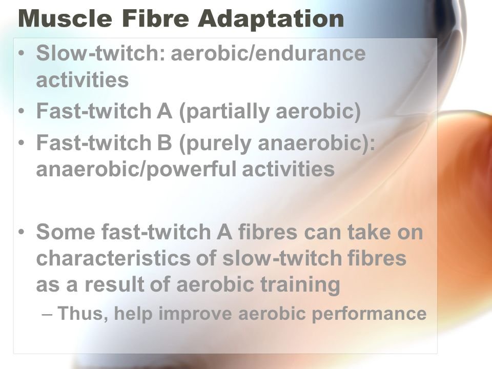 Muscle Fibre Adaptation