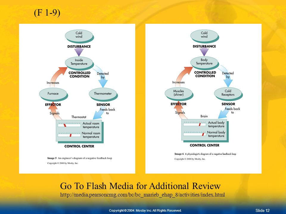 Go To Flash Media for Additional Review