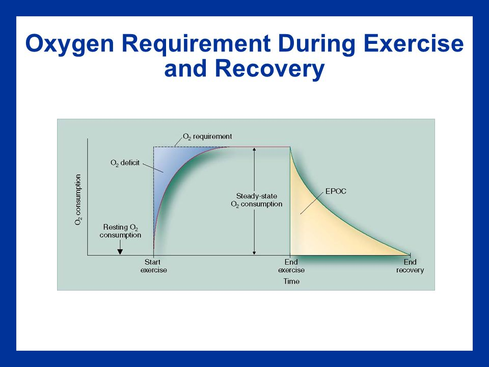 Oxygen Requirement During Exercise and Recovery