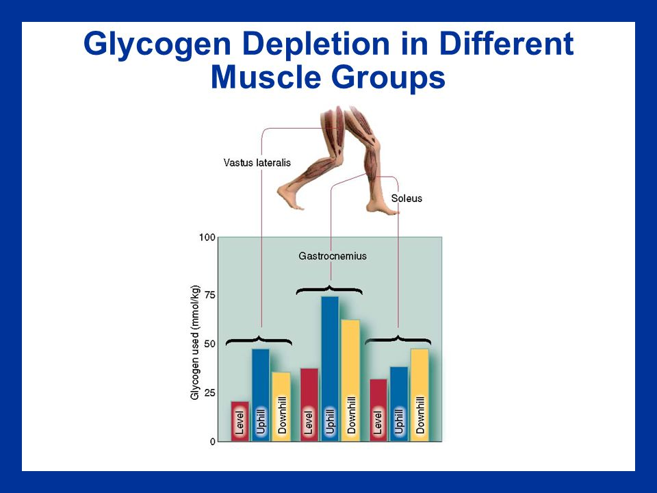 Glycogen Depletion in Different Muscle Groups