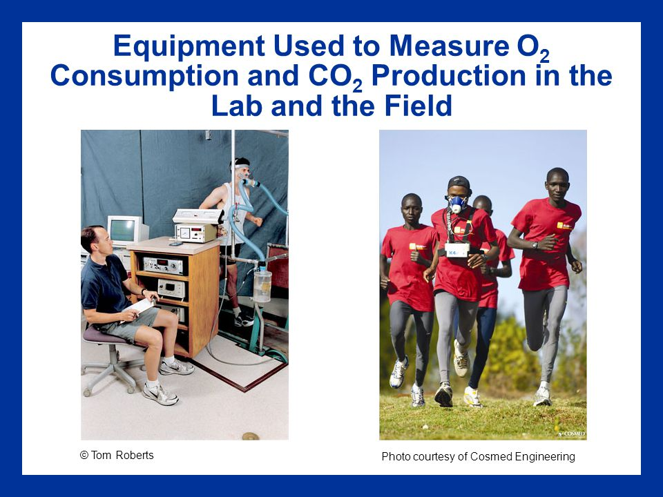 Equipment Used to Measure O2 Consumption and CO2 Production in the Lab and the Field