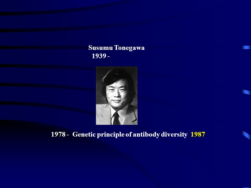 Genetic principle of antibody diversity 1987