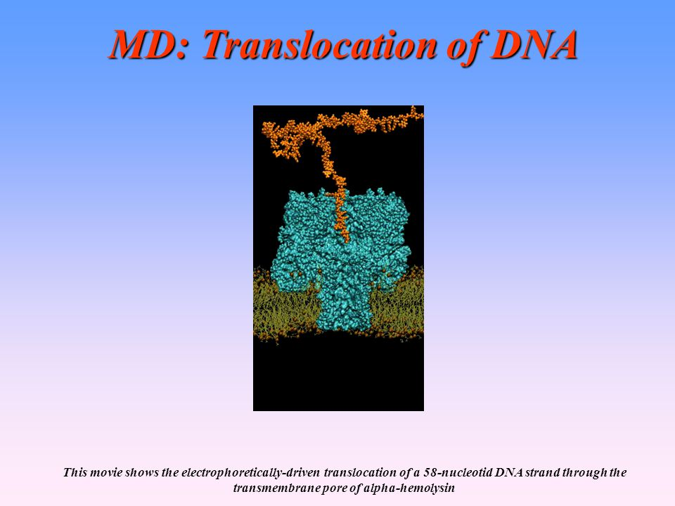 MD: Translocation of DNA