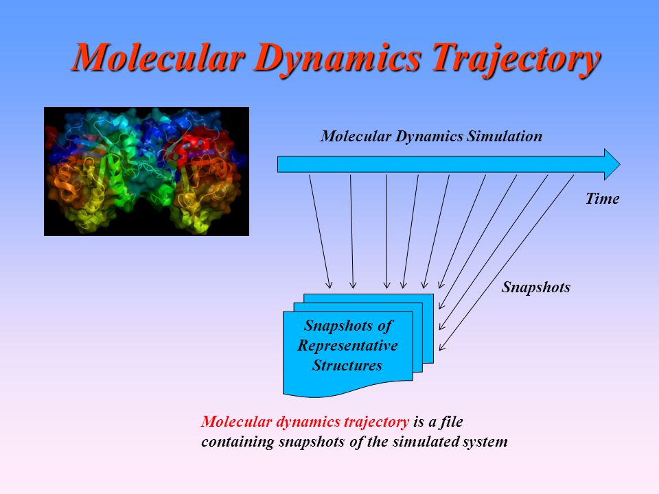 Molecular Dynamics Trajectory Snapshots of Representative Structures