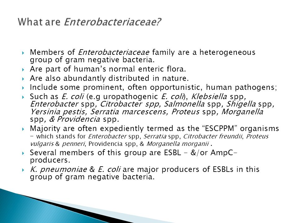 What are Enterobacteriaceae