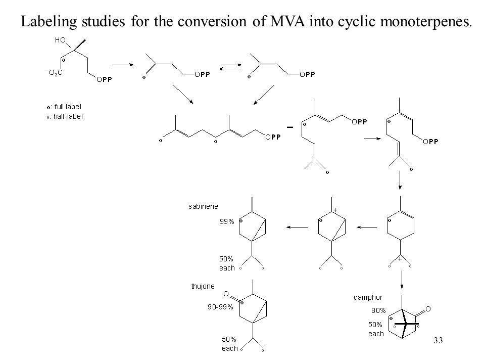 Labeling studies for the conversion of MVA into cyclic monoterpenes.