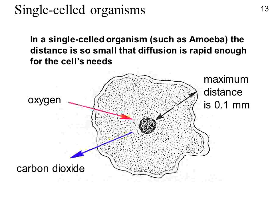 Single-celled organisms