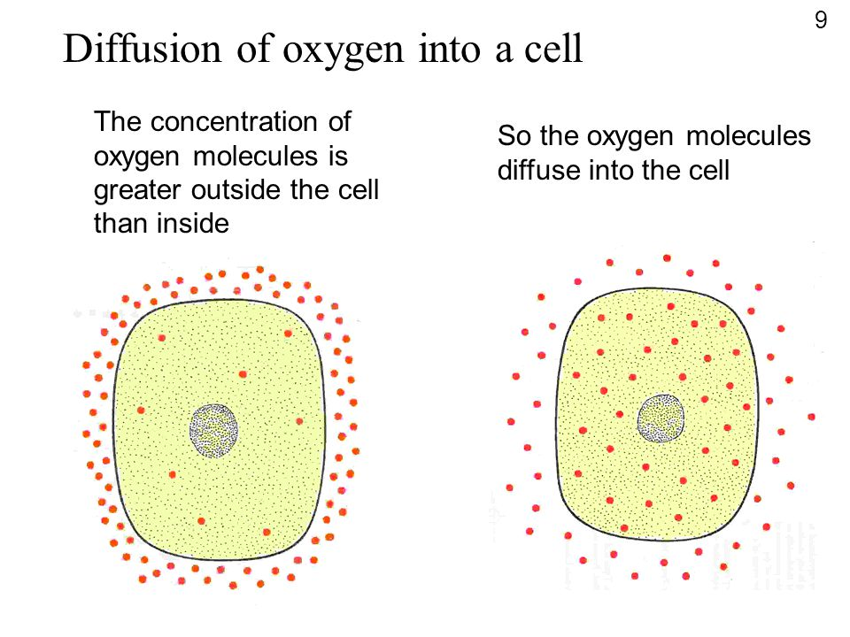 Diffusion of oxygen into a cell