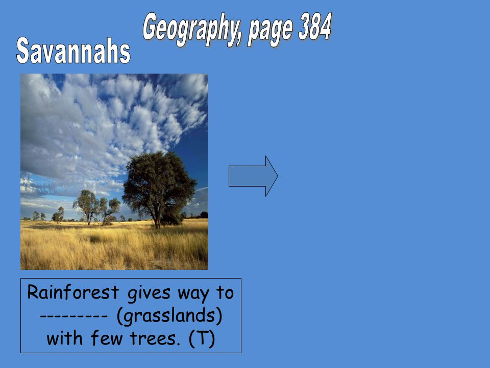 Rainforest gives way to --------- (grasslands) with few trees. (T)