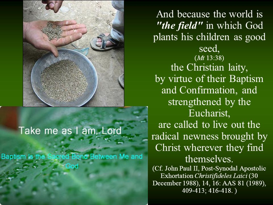 And because the world is the field in which God plants his children as good seed,
