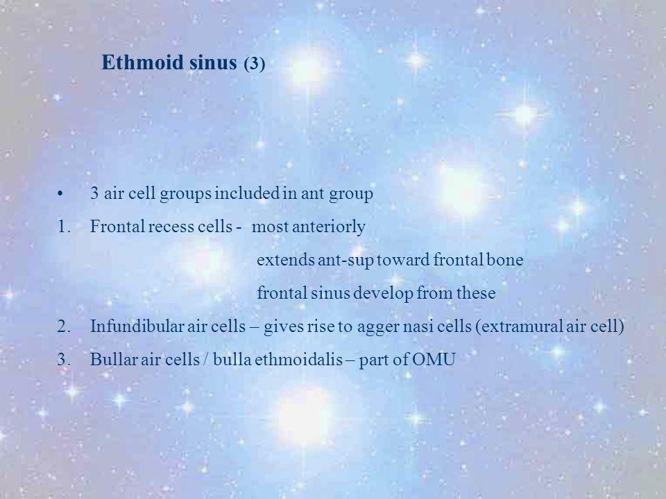 Ethmoid sinus (3) 3 air cell groups included in ant group