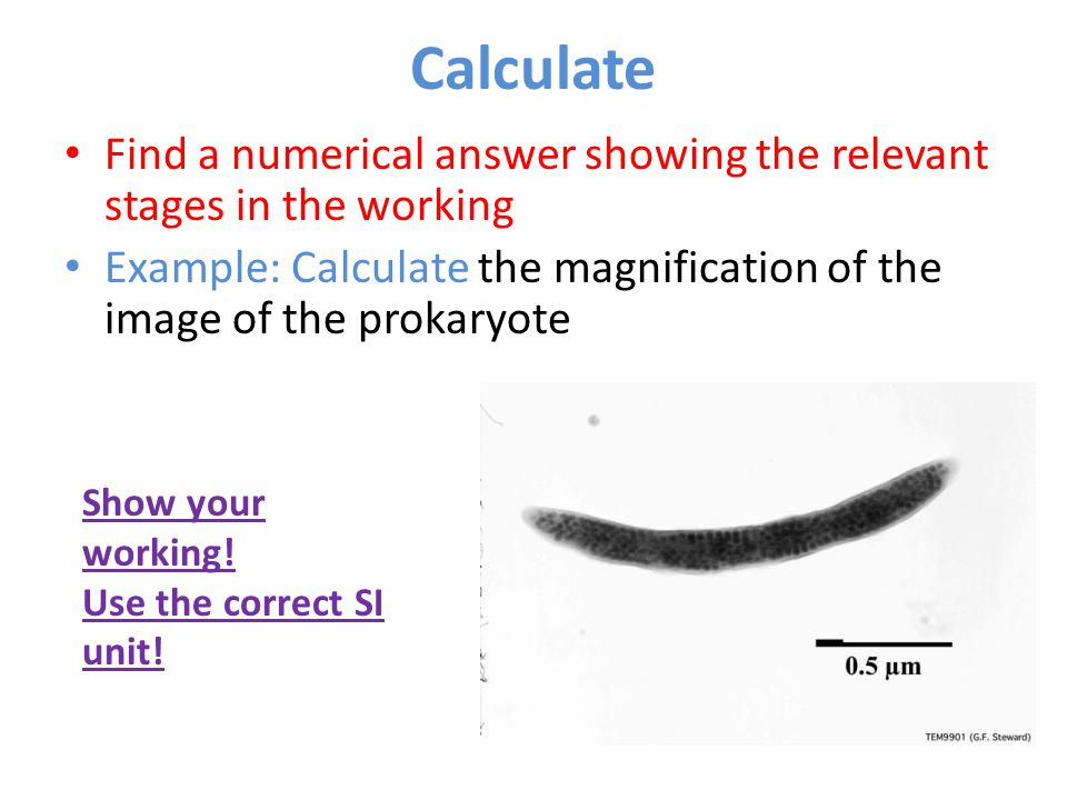Calculate Find a numerical answer showing the relevant stages in the working. Example: Calculate the magnification of the image of the prokaryote.
