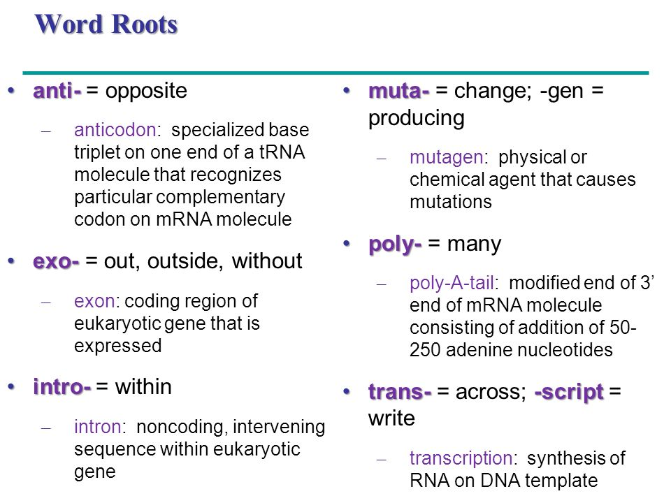 Word Roots anti- = opposite exo- = out, outside, without