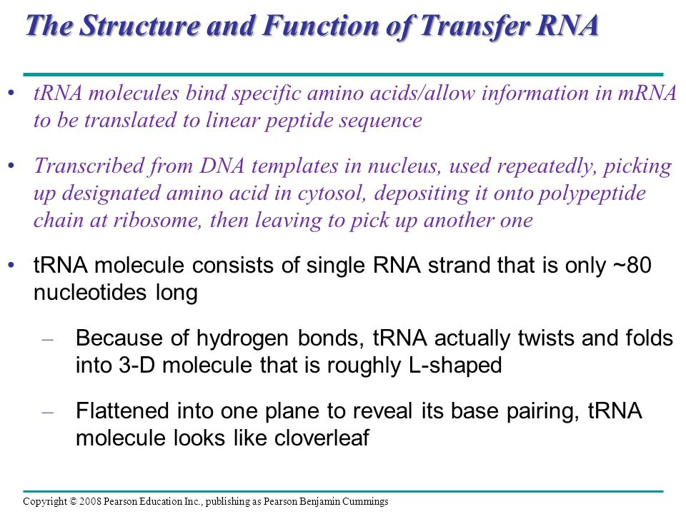 The Structure and Function of Transfer RNA