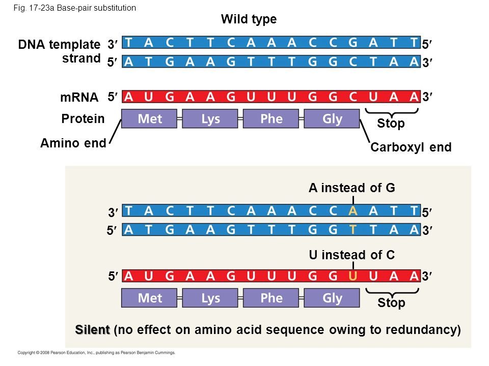 Silent (no effect on amino acid sequence owing to redundancy)