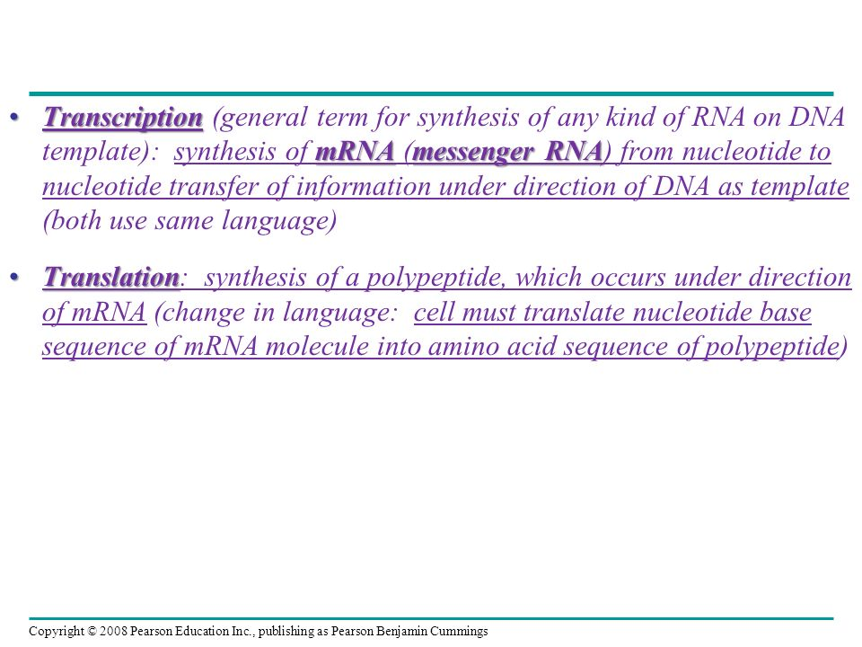 Transcription (general term for synthesis of any kind of RNA on DNA template): synthesis of mRNA (messenger RNA) from nucleotide to nucleotide transfer of information under direction of DNA as template (both use same language)
