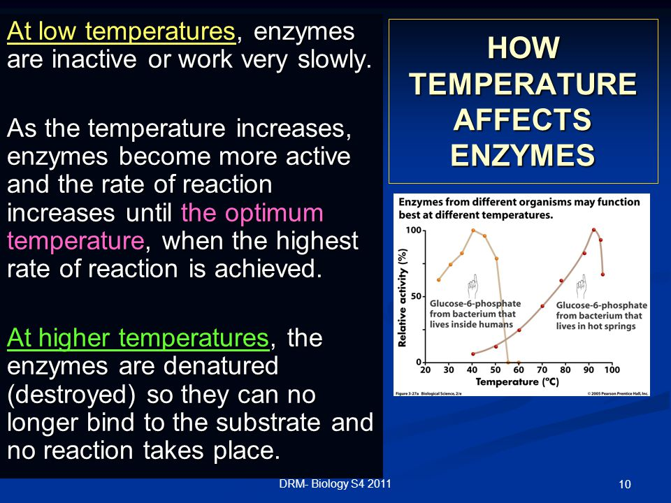 HOW TEMPERATURE AFFECTS ENZYMES