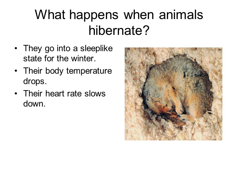 What happens when animals hibernate