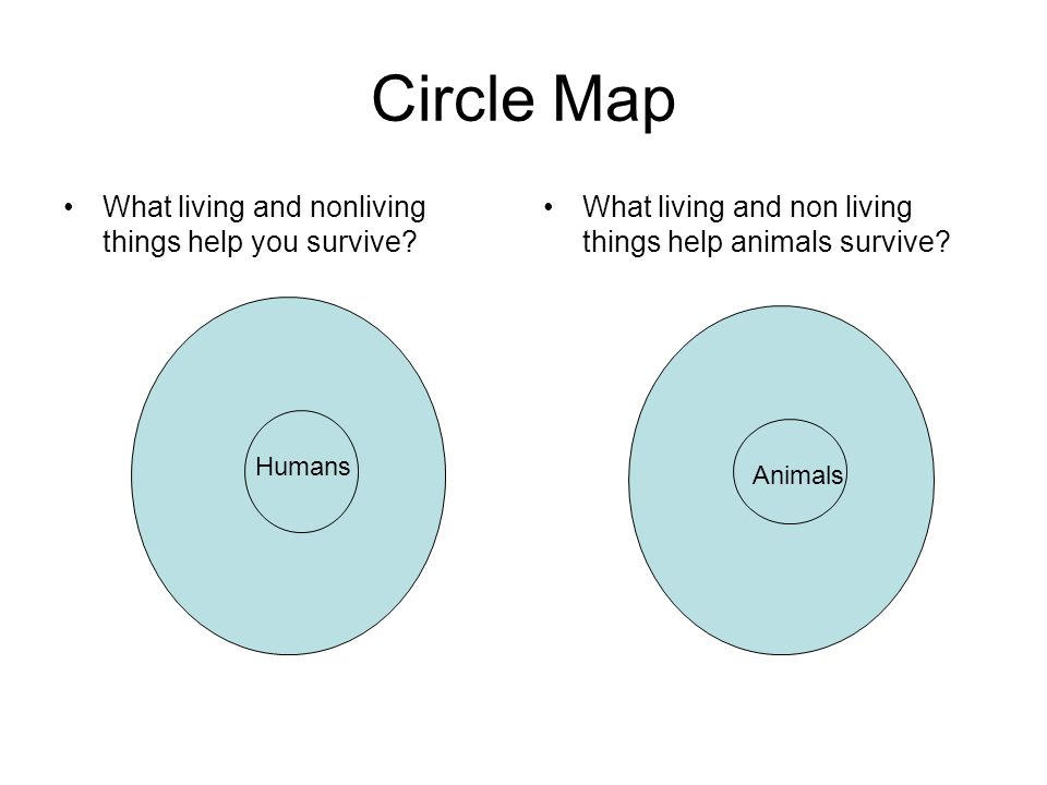 Circle Map What living and nonliving things help you survive