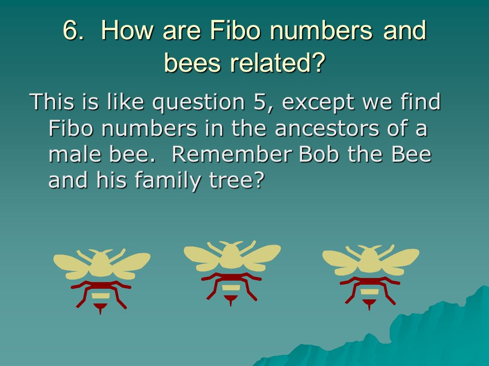 6. How are Fibo numbers and bees related
