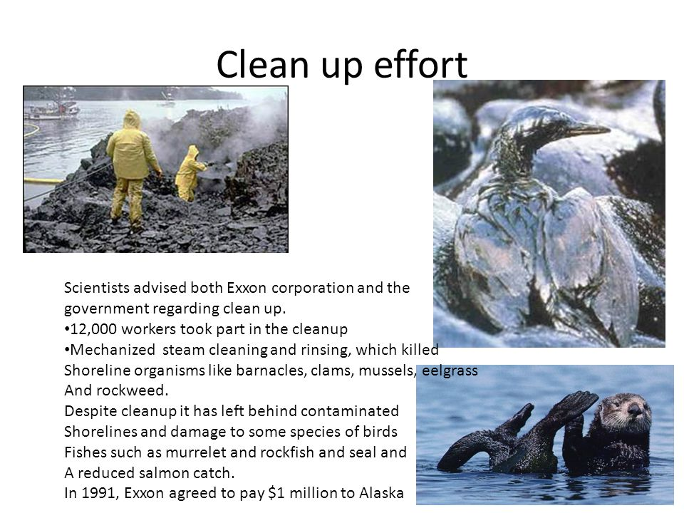 Clean up effort Scientists advised both Exxon corporation and the