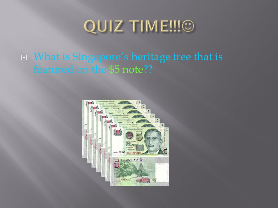 QUIZ TIME!!! What is Singapore's heritage tree that is featured on the $5 note