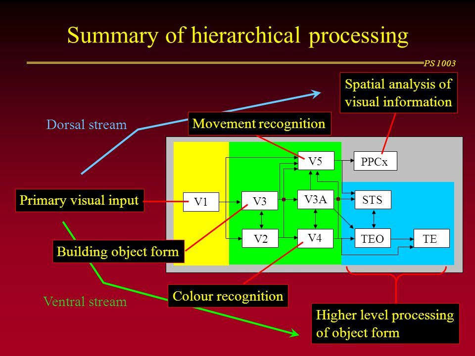 Summary of hierarchical processing