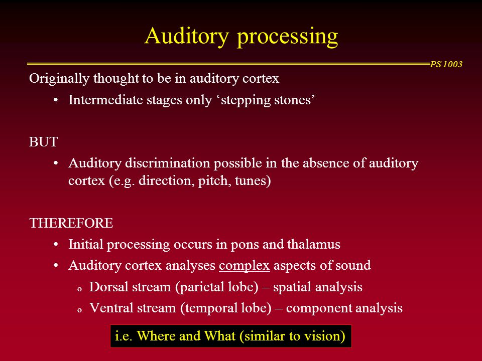 Auditory processing Originally thought to be in auditory cortex