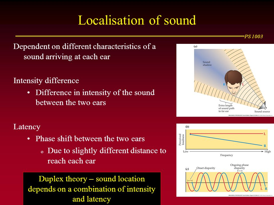 Localisation of sound Dependent on different characteristics of a sound arriving at each ear. Intensity difference.