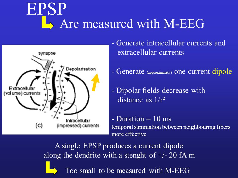 EPSP Are measured with M-EEG - Generate intracellular currents and