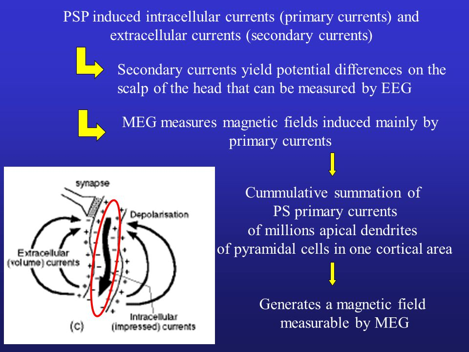 PSP induced intracellular currents (primary currents) and
