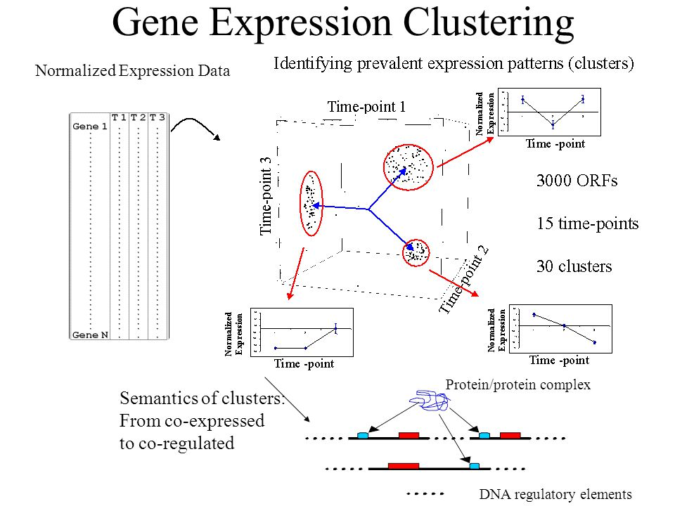 Gene Expression Clustering