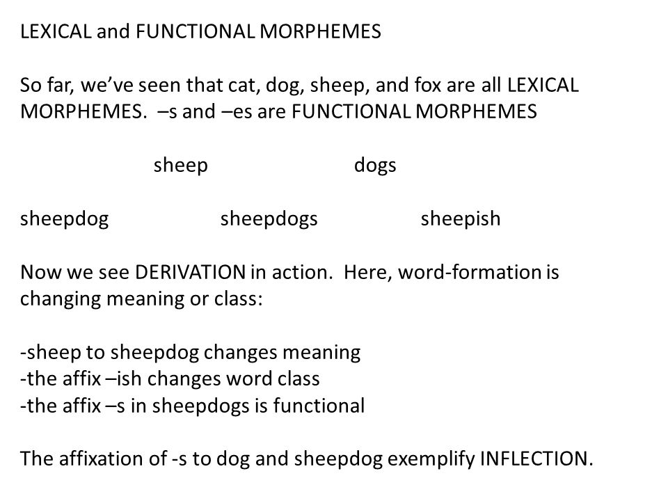 LEXICAL and FUNCTIONAL MORPHEMES