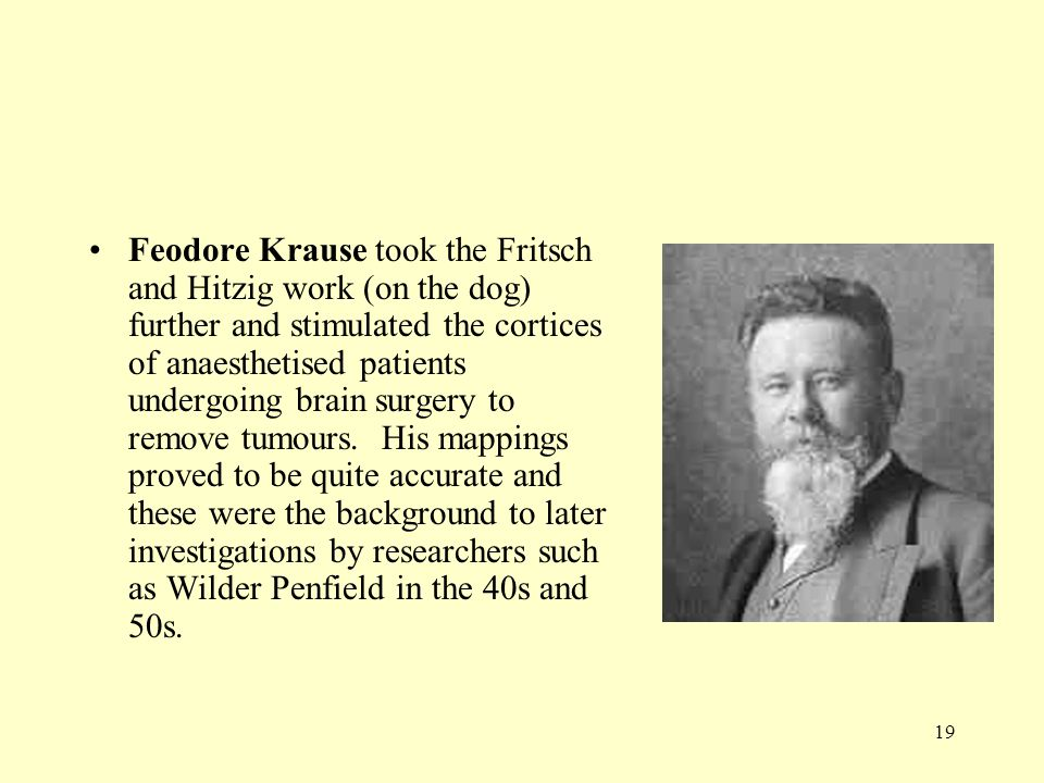 Feodore Krause took the Fritsch and Hitzig work (on the dog) further and stimulated the cortices of anaesthetised patients undergoing brain surgery to remove tumours.