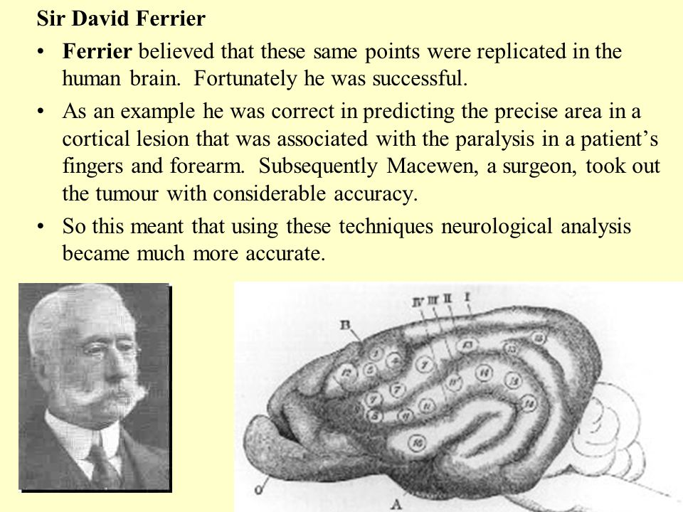 Sir David Ferrier Ferrier believed that these same points were replicated in the human brain. Fortunately he was successful.