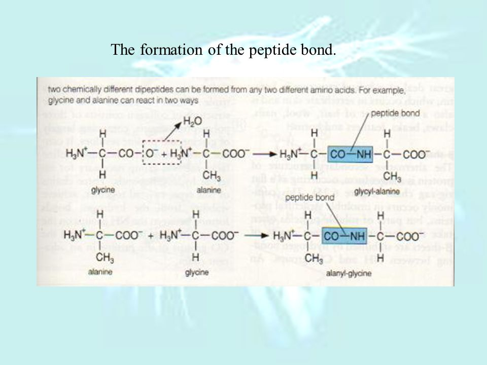 The formation of the peptide bond.