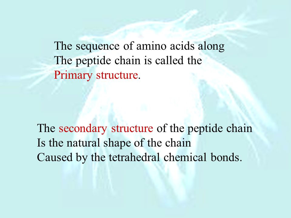 The sequence of amino acids along