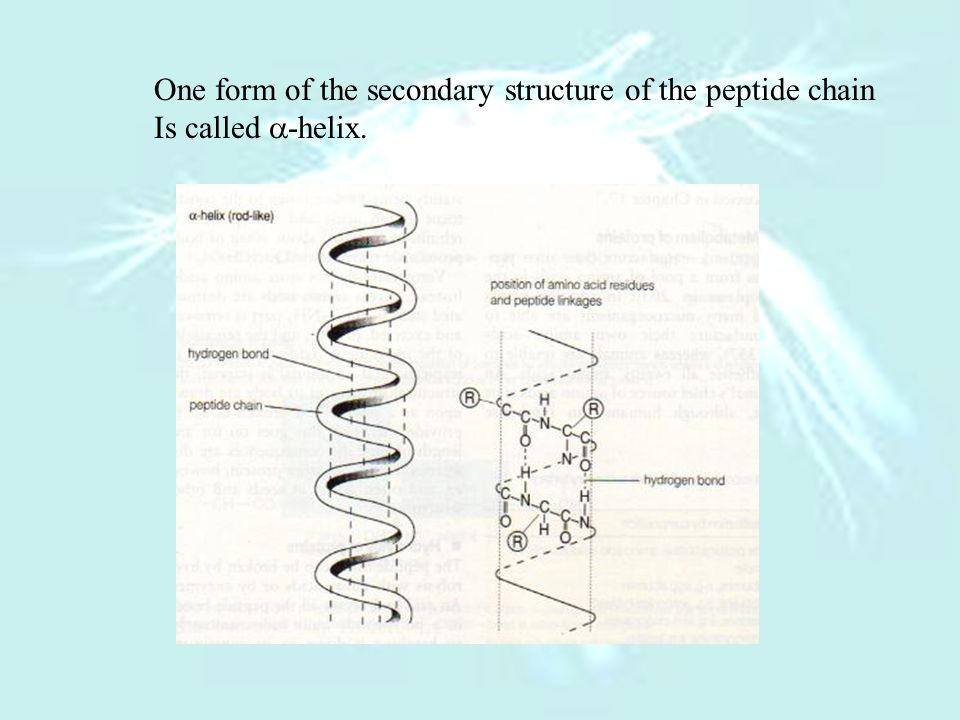 One form of the secondary structure of the peptide chain