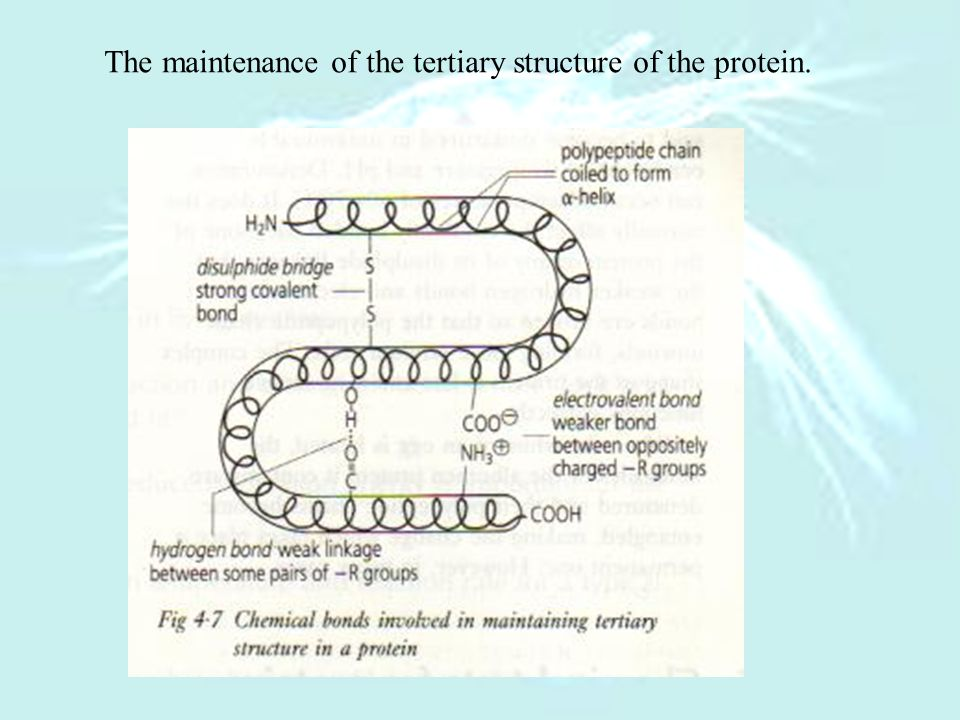 The maintenance of the tertiary structure of the protein.