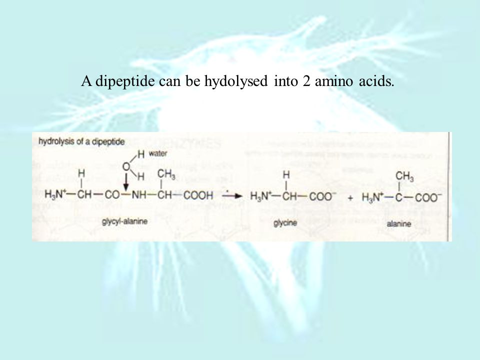 A dipeptide can be hydolysed into 2 amino acids.