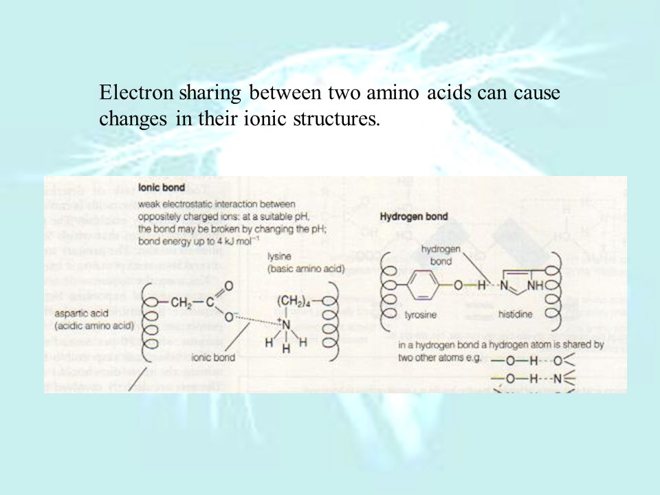 Electron sharing between two amino acids can cause