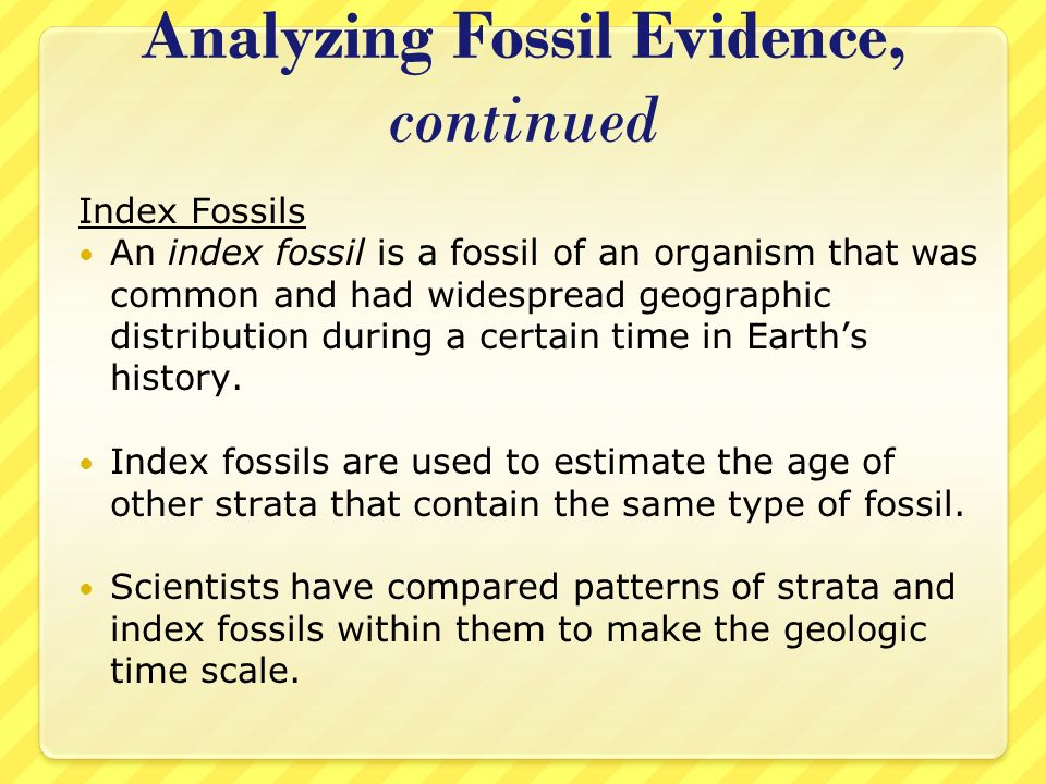 Analyzing Fossil Evidence, continued