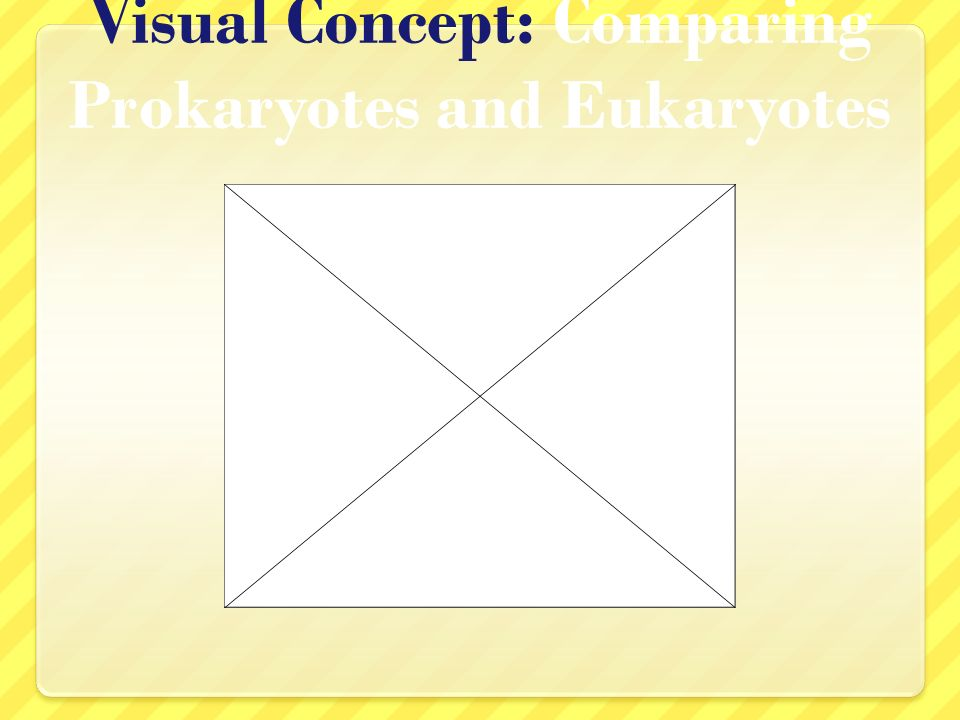 Visual Concept: Comparing Prokaryotes and Eukaryotes