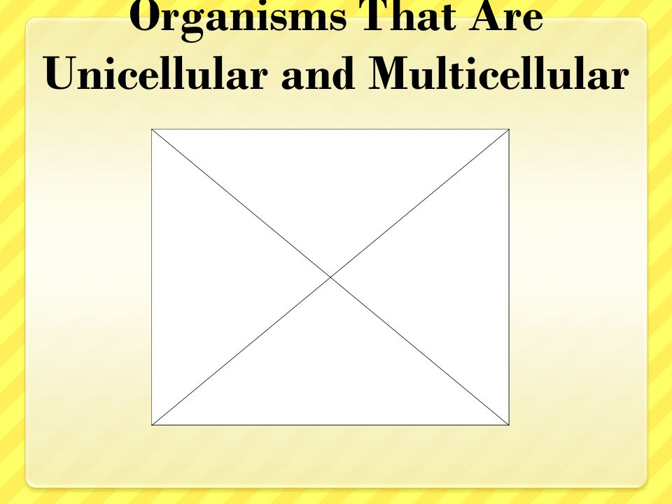 Visual Concept: Comparing Organisms That Are Unicellular and Multicellular