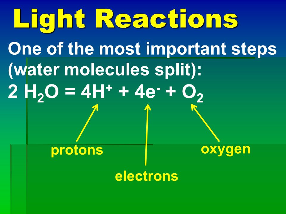 Light Reactions 2 H2O = 4H+ + 4e- + O2