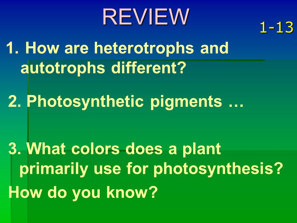 REVIEW How are heterotrophs and autotrophs different