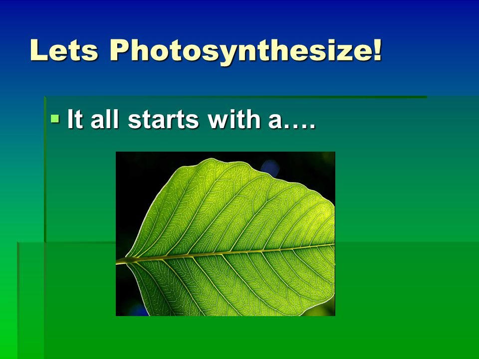 Lets Photosynthesize! It all starts with a….